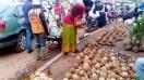 noix et huile de coco à vendre