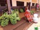 plantains à vendre