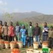 GIC des producteurs de tomate