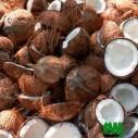 noix de coco à vendre