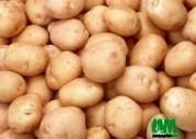 pomme de terre à vendre