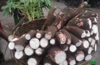 super manioc à vendre