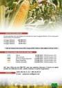 maïs frais à vendre
