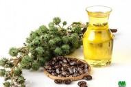 huile de ricin à vendre