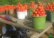 tomate à vendre