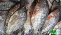 poisson frais à vendre